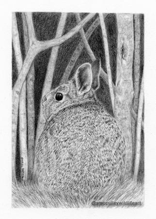 rabbit for site.jpg