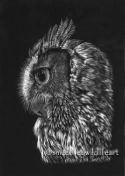 screech owl 2018.jpg