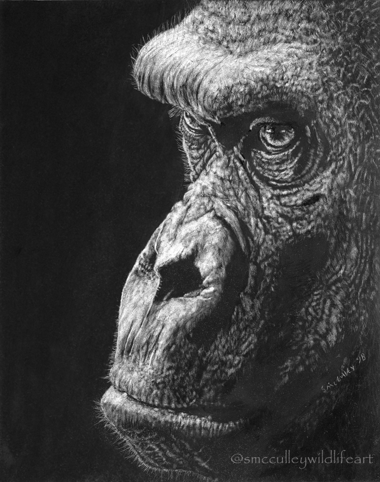 scratch gorilla 2018.jpg