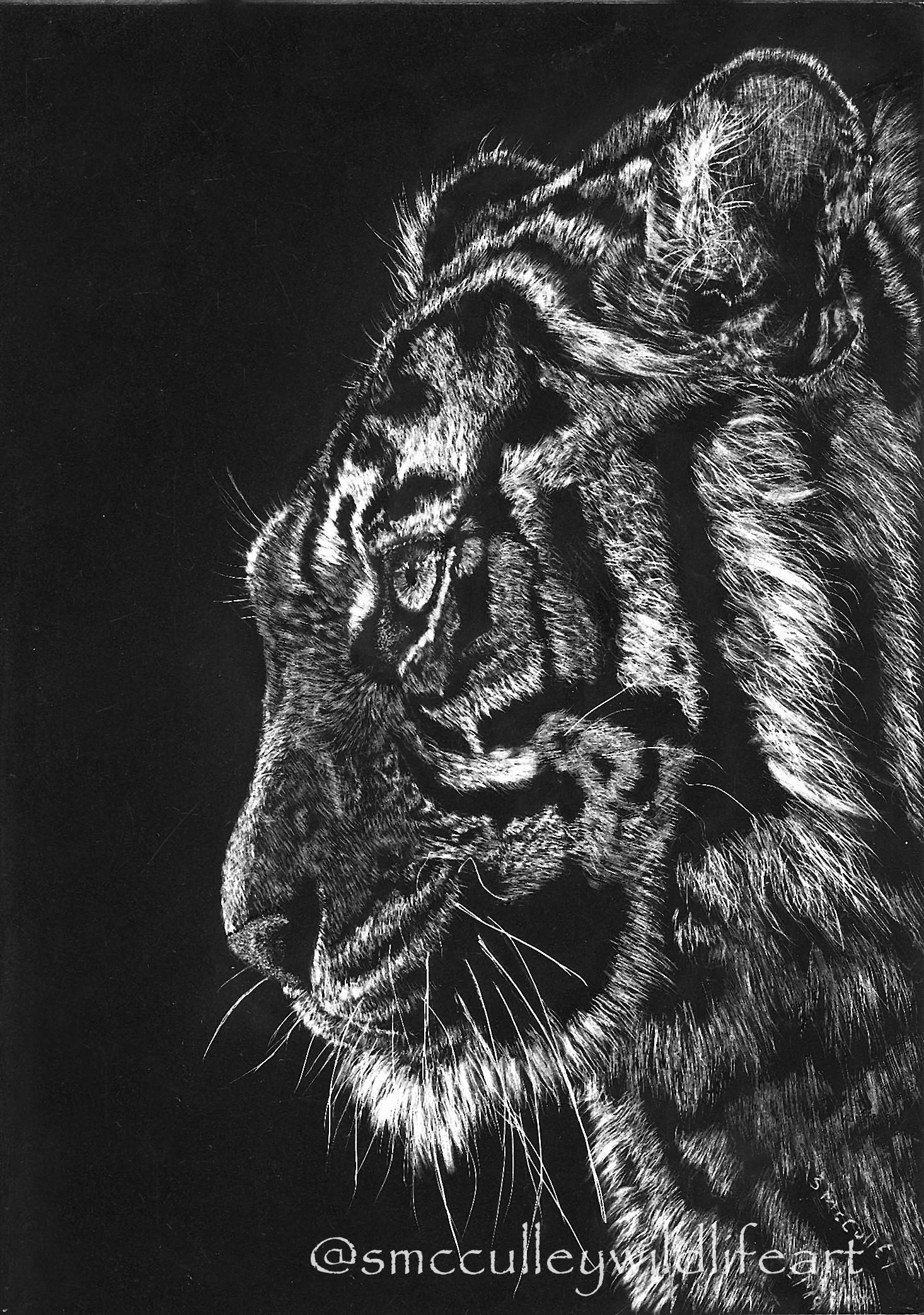 Tiger (profile)