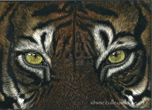 Tiger (close up)