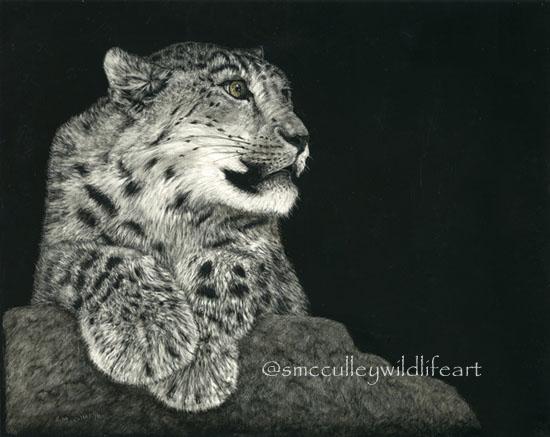 Snow Leopard (scratchboard)