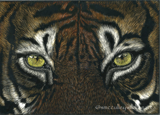 Tiger Eyes image size 5 x 7 or 8 x 10, paper size 8 x 10""