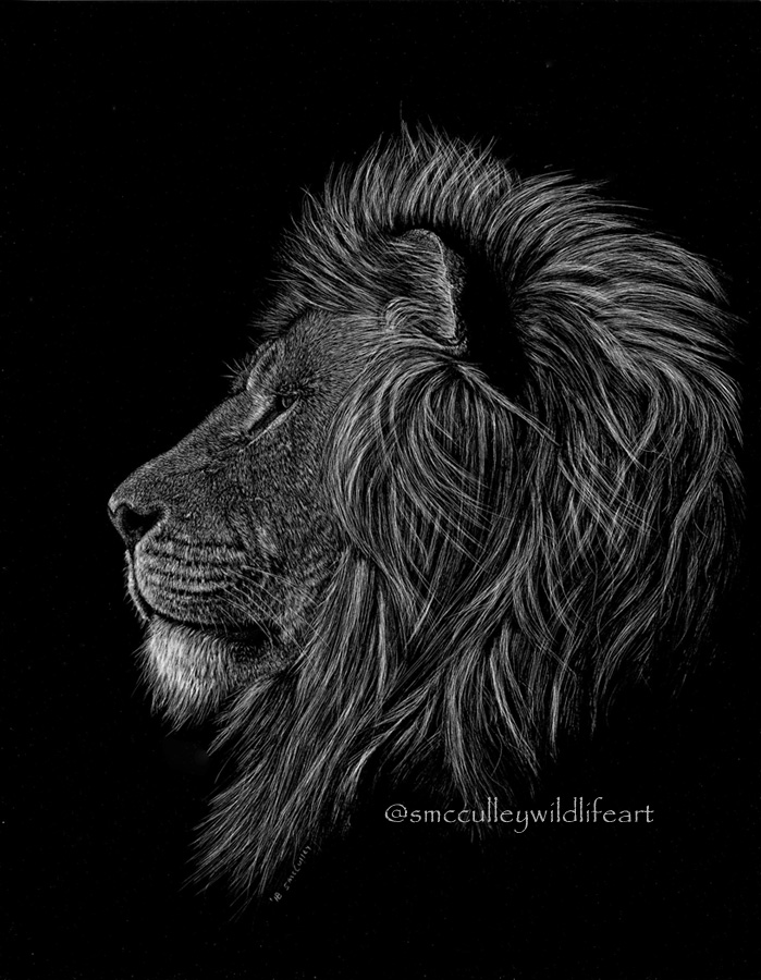 Lion profile 8 x 10 and 11 x 14 prints sizes