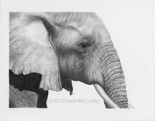 African Elephant print sizes: 8 x 10 and 11 x 14