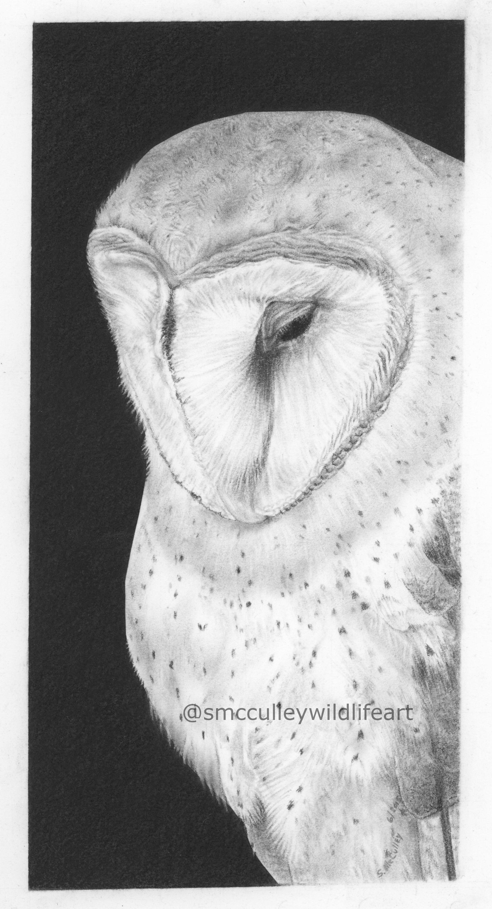 "Barn Owl print size: 8 x 11"""