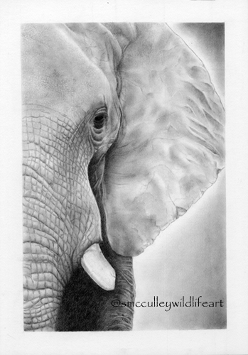 "(I dream of Africa"" African Elephant (vertical) paper size 8 x 10 and 11 x 14"
