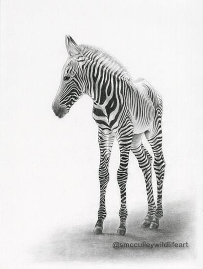 Young Zebra print sizes 8 x 10 and 11 x 14""