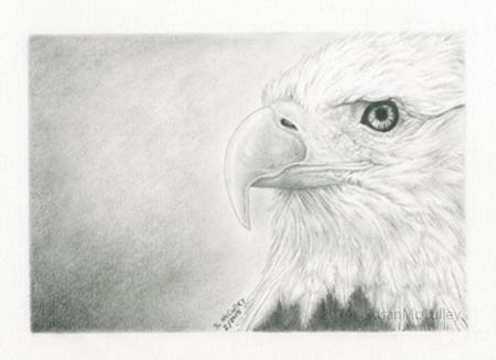 """Bald Eagle - close up image size 5 x 7, paper size 8 x 10"""""""