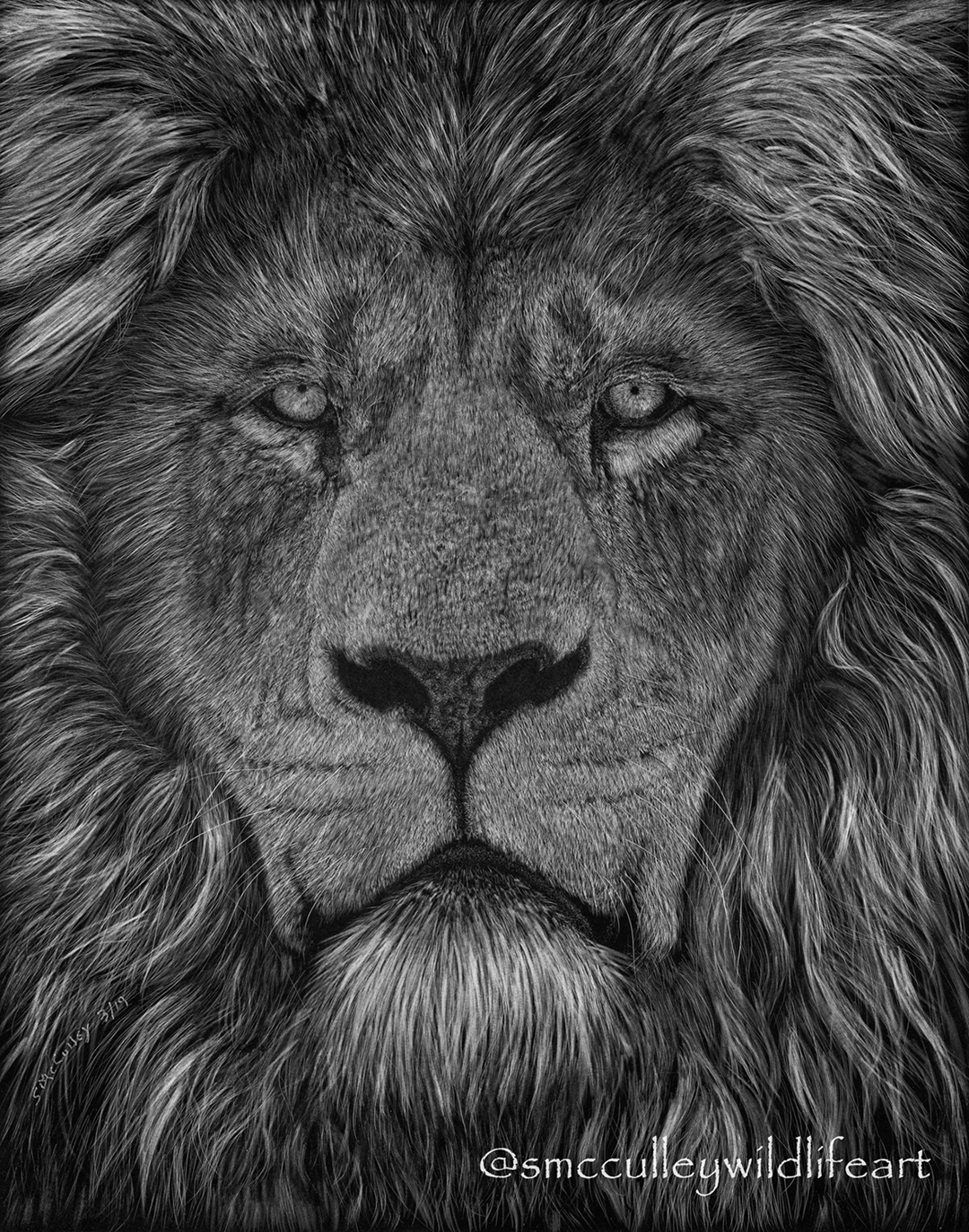 """The look"" (Lion) 8 x 10 or 11 x 14"" print sizes"