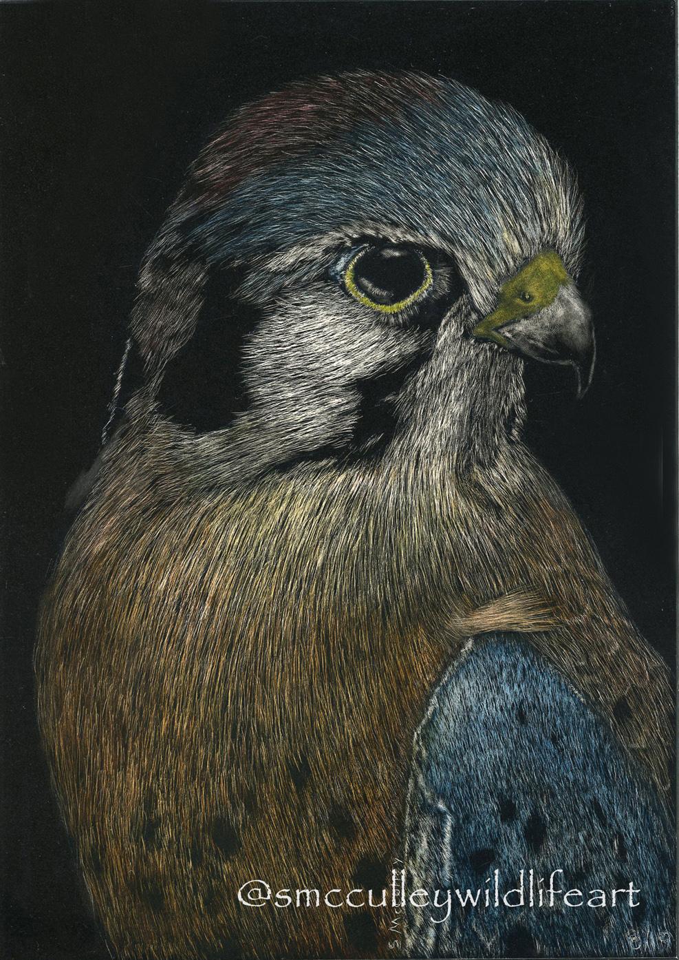 Skye (American Kestrel)