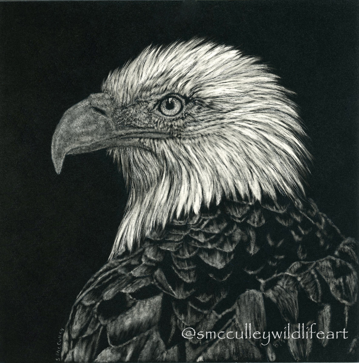 Bald eagle (2019)