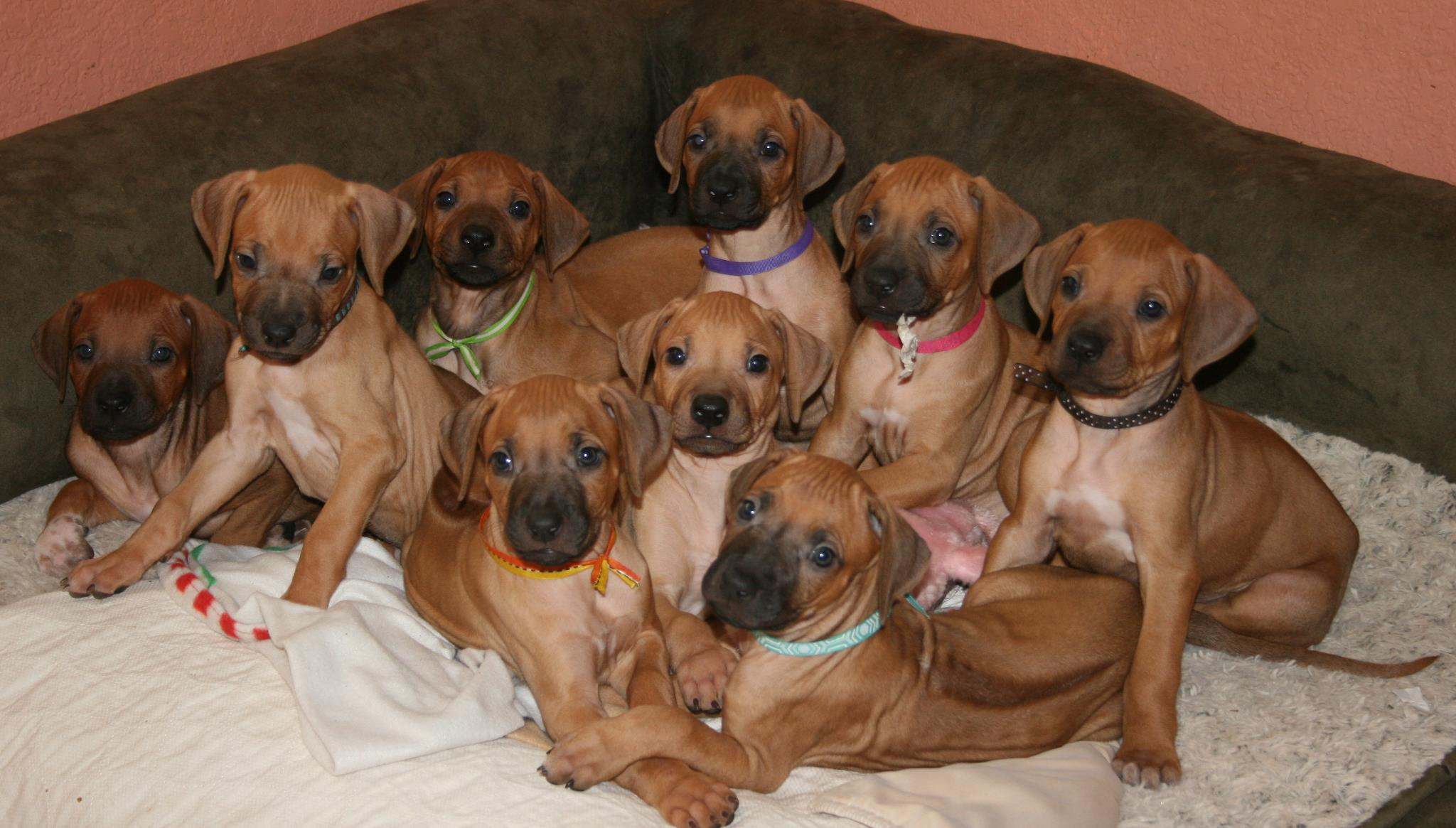 photo taken by Art Valdivia of Manzanita pups 2013