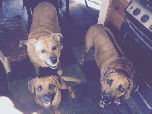 The little guy up front is  Reggie  from Carson. He was just supposed to be a foster…. but Rik & Reggie's foster siblings Koti & Simba couldn't let him go.