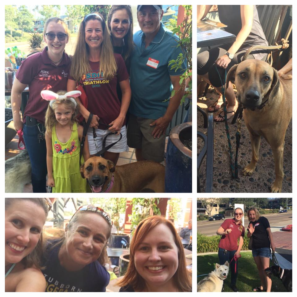 June 26, 2016. Yappy Hour at Rock Bottom Brewery in La Jolla CA, sponsored by Pints and Paws Events.