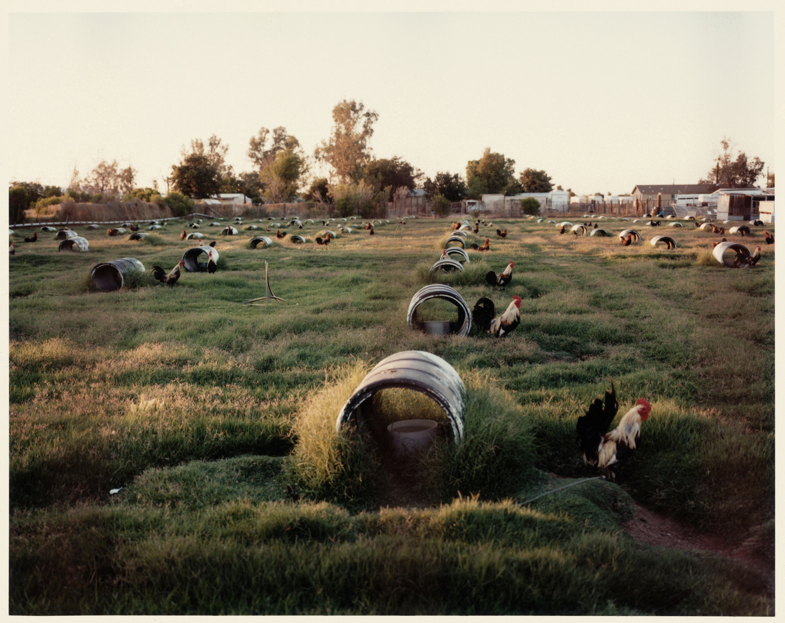 Lucy Levene     Untitled (from the L.A. Stories series,)  2009    C-print, AP ½    20 x 24 inches
