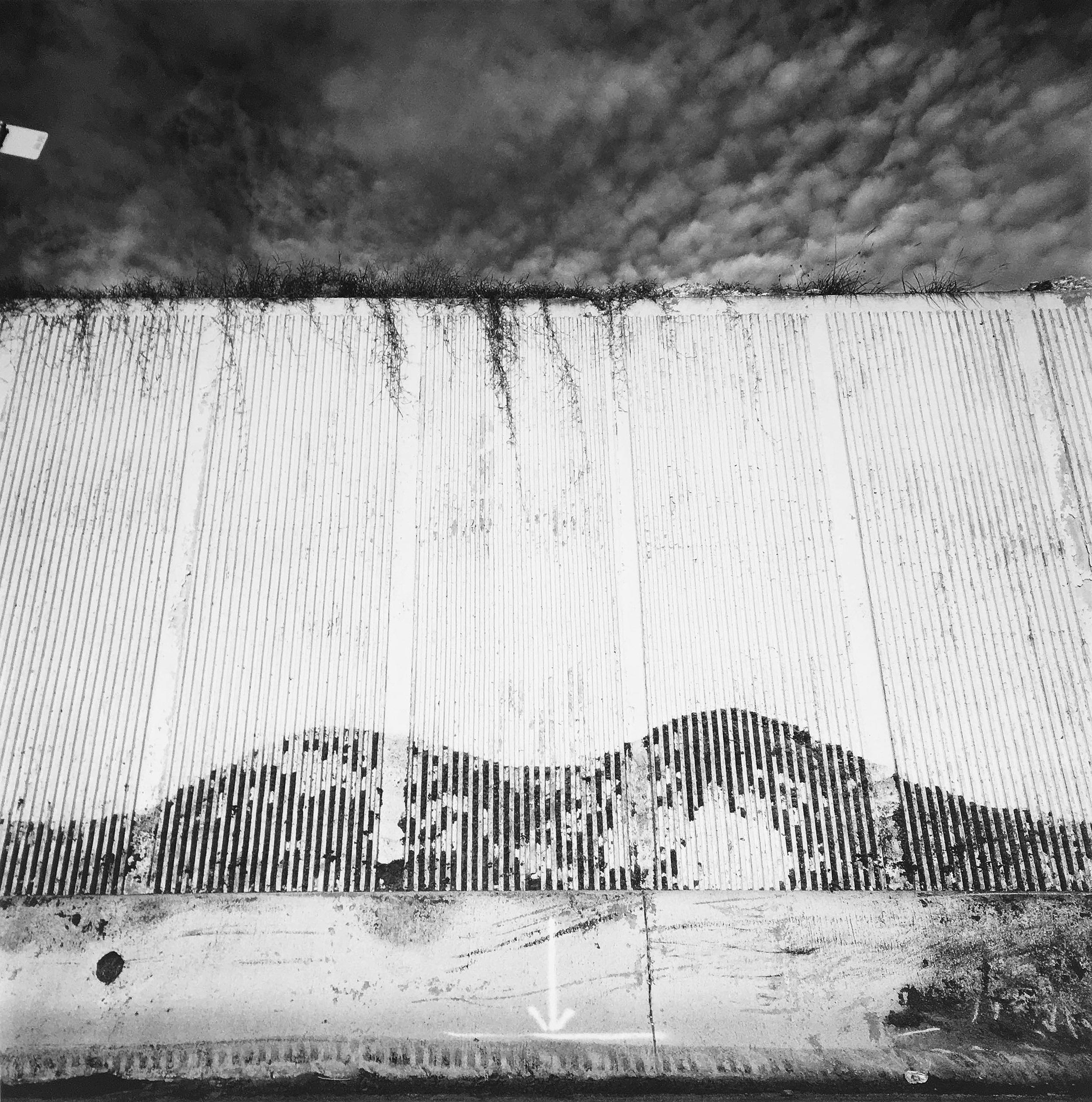 Eric Tomberlin, Buffalo Roam , 2005,inkjet print,46 x 46 inches