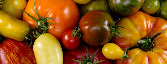 heirloom tomato edmonton st albert greenhouse