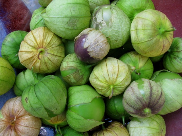 tomatillo edmonton st albert greenhouse two colour fiesta