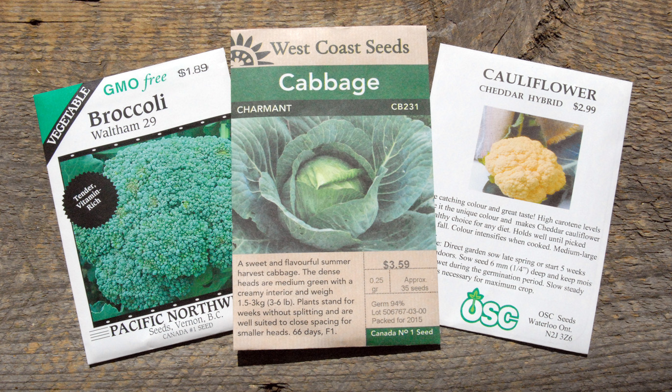 Cabbage-cheddar-cauliflower-broccoli-edmonton-stalbert-holes