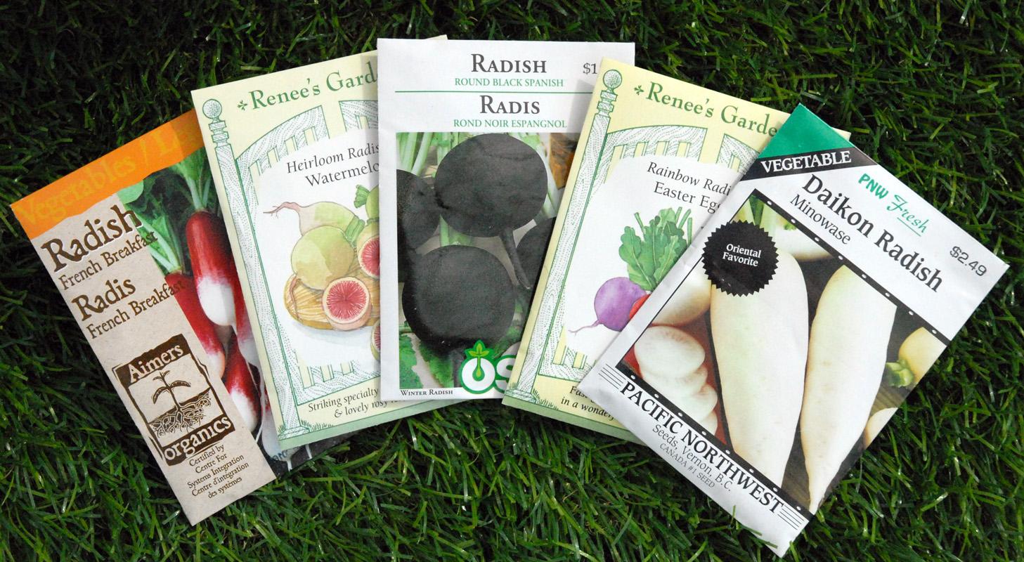 radish-seeds-edmonton-stalbert-holes-yeg