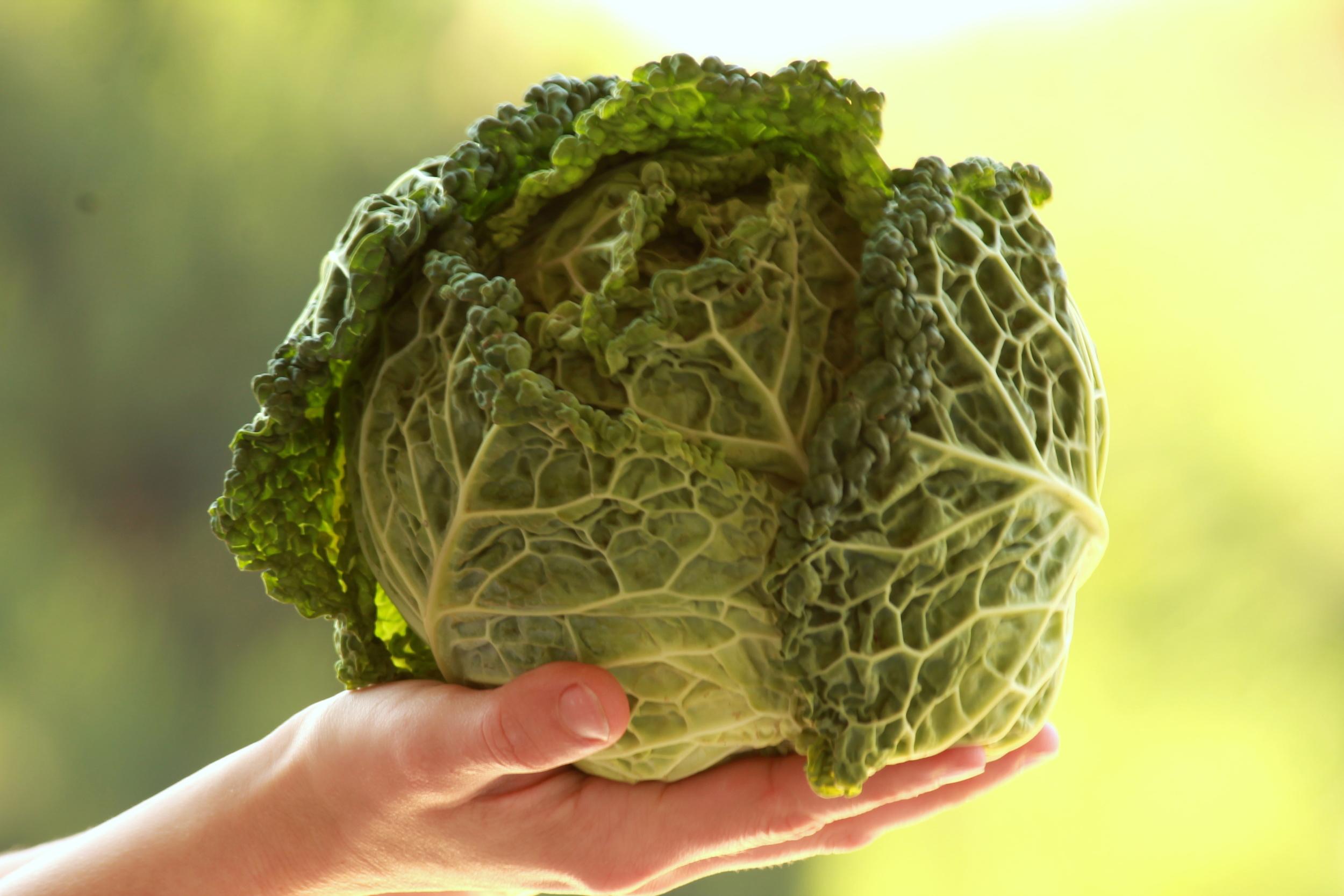 cabbage-edmonton-stalbert-alberta