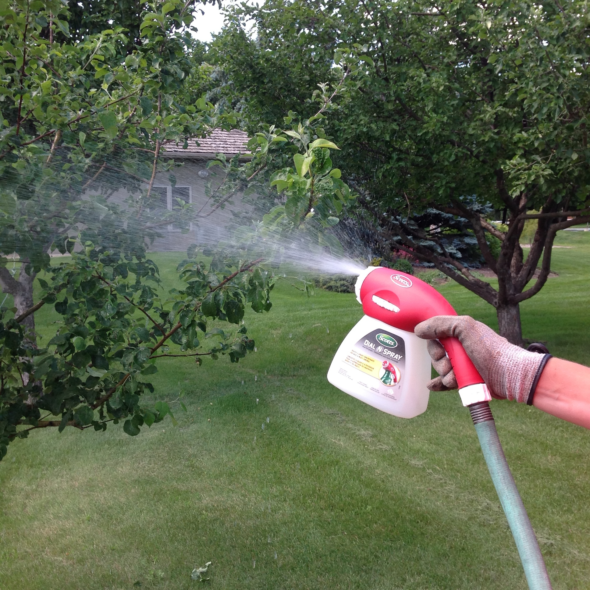 Step 7: Thoroughly spray tree using Dial N' Spray.