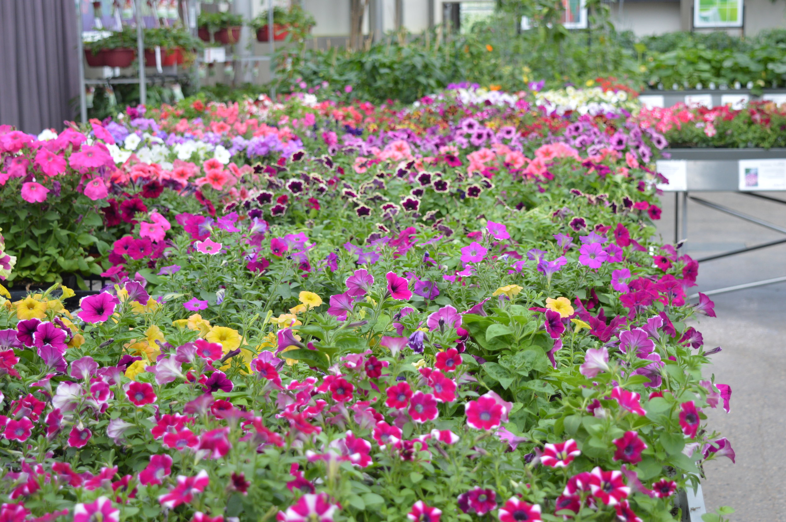 flowers — Hole's Blog — Hole's Greenhouses