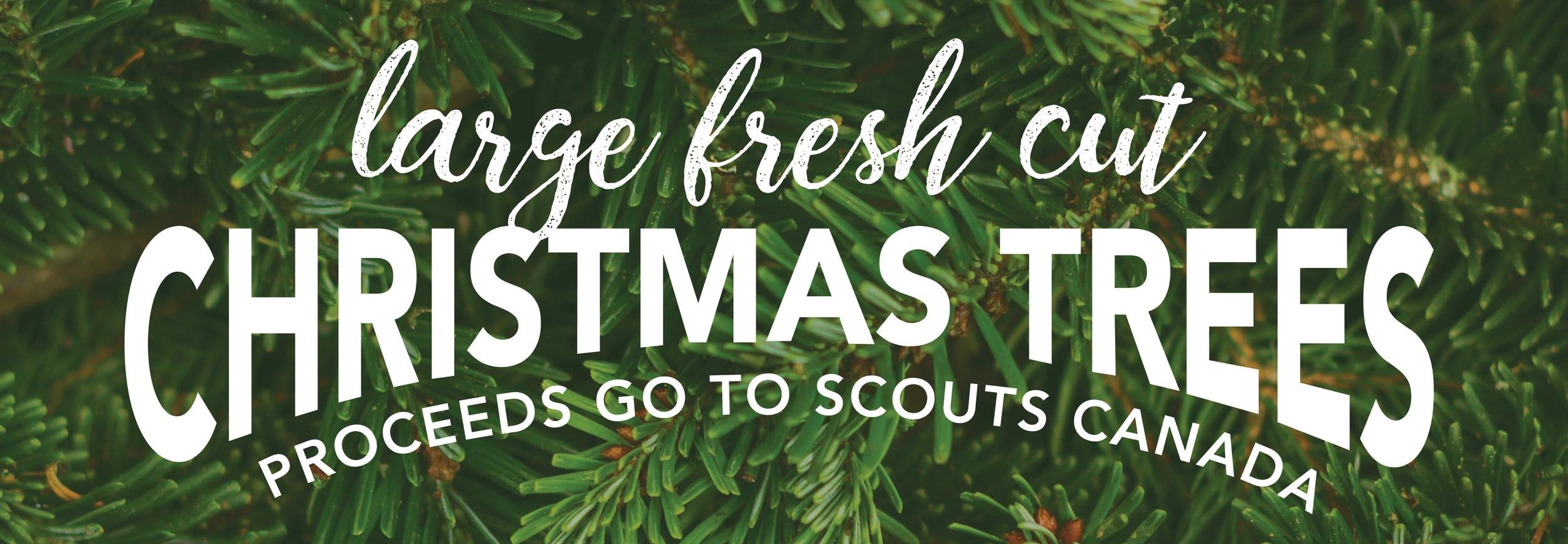 17_11_10-Boy Scout Christmas Tree Sign1-01.jpg