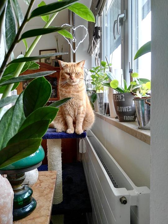 cat-2450448_960_720.jpg