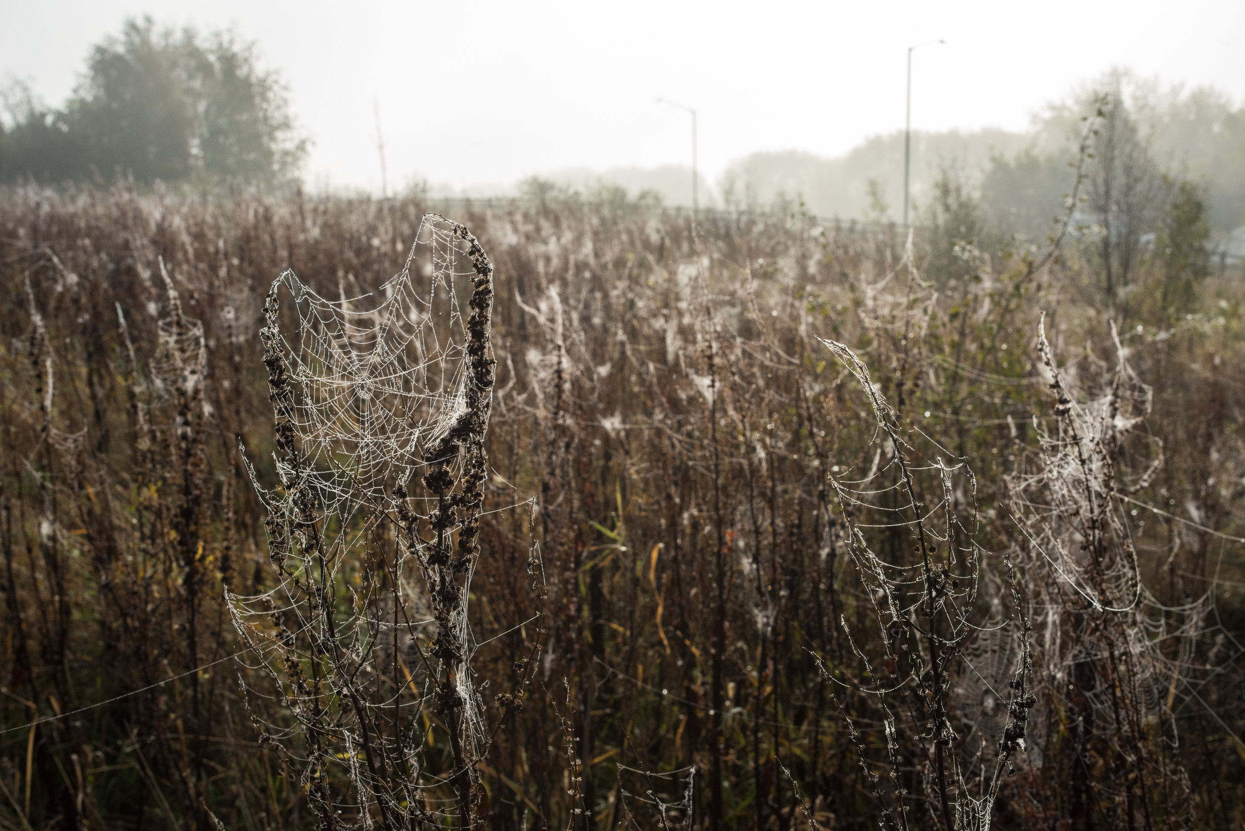 Field Of Spiderwebs, Stratford-upon-Avon, England 2018