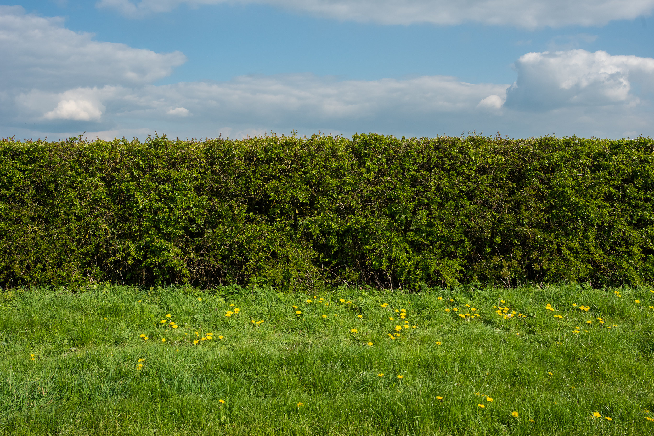 The Hedgerow - A series documenting hedges, their purpose and their destruction