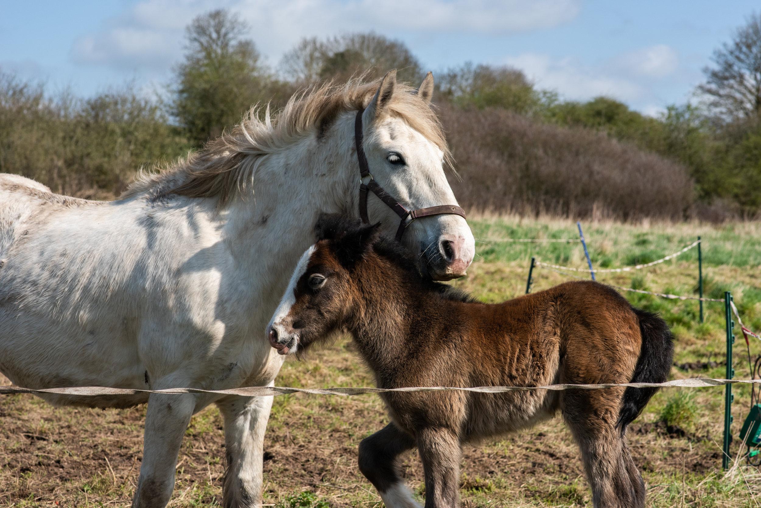 Hazel with days old foal Catkin