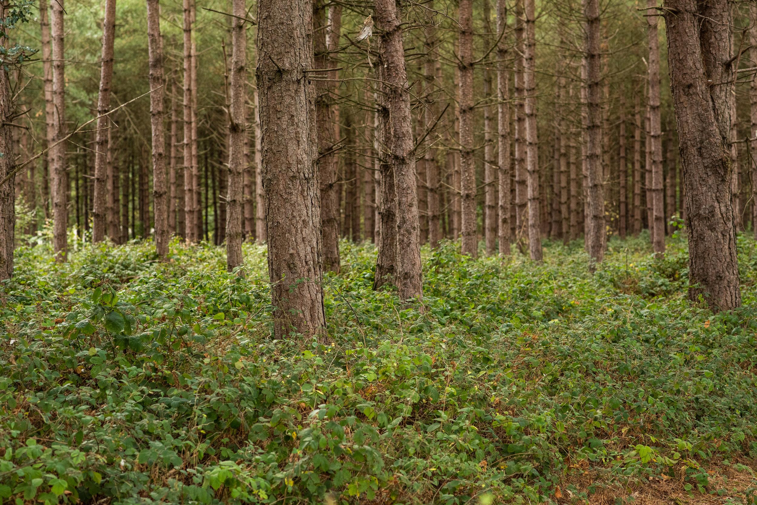 Private Wood, Midlands, 2018