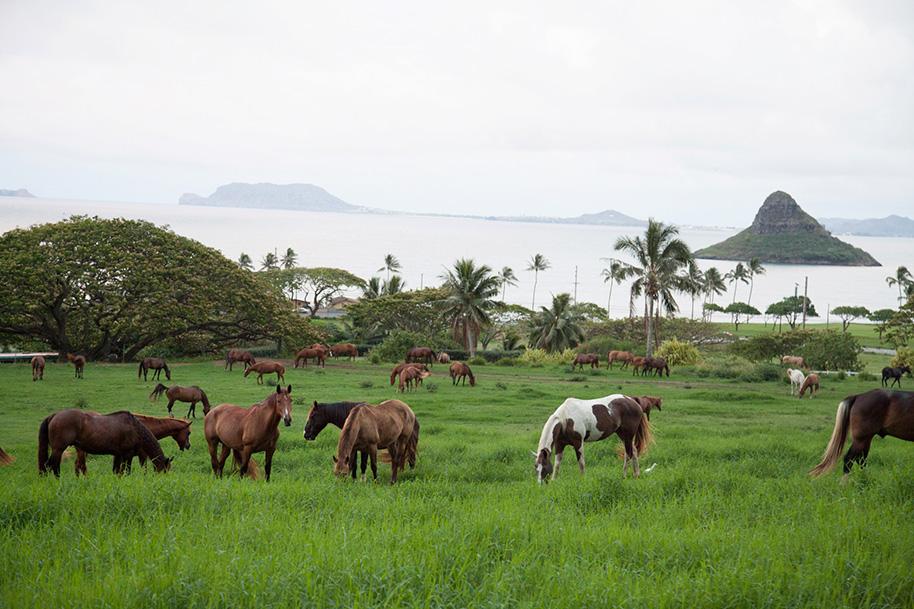 Kualoa-Ranch-Wedding-1.jpg