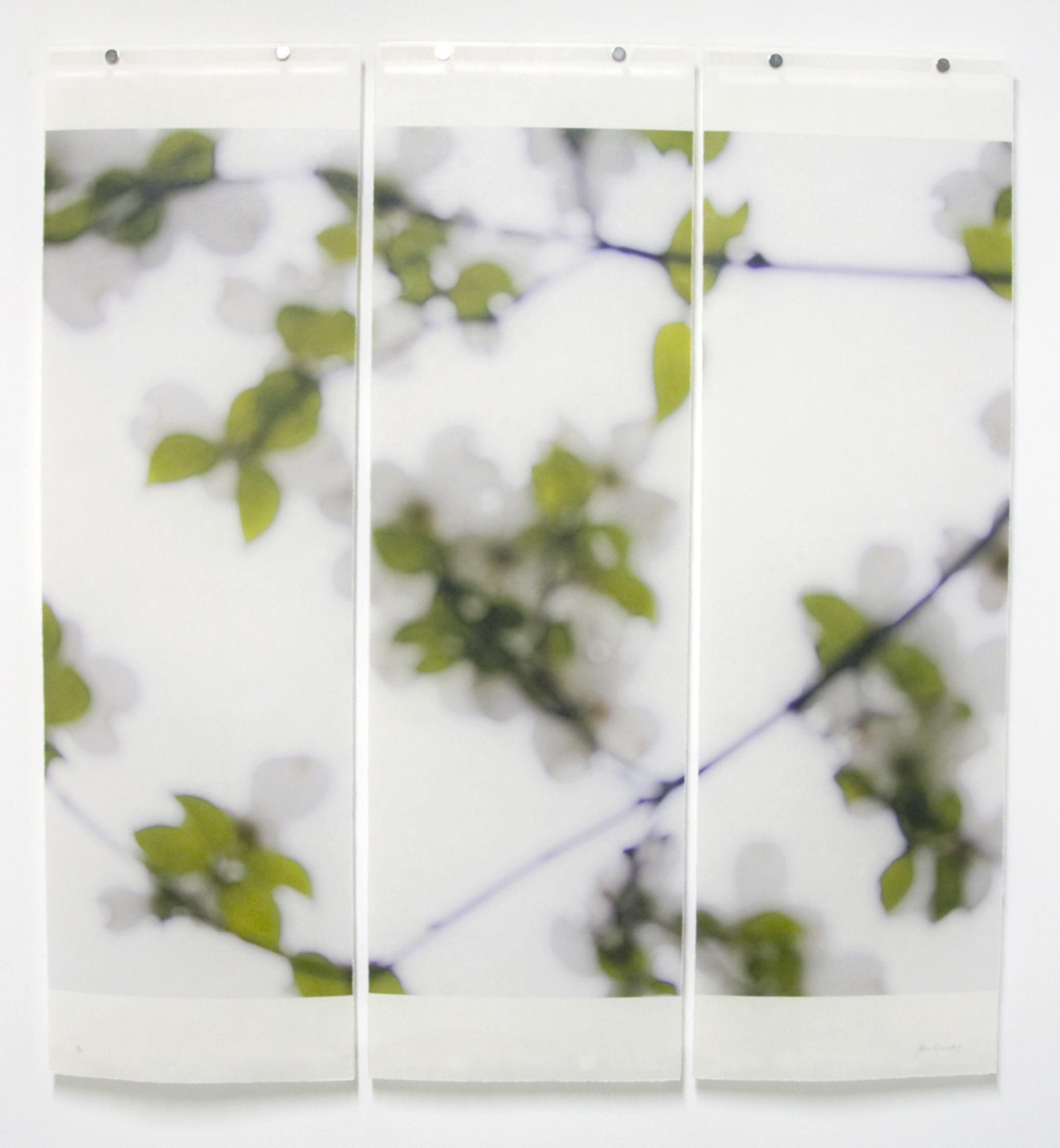 Dogwood (White), No.2
