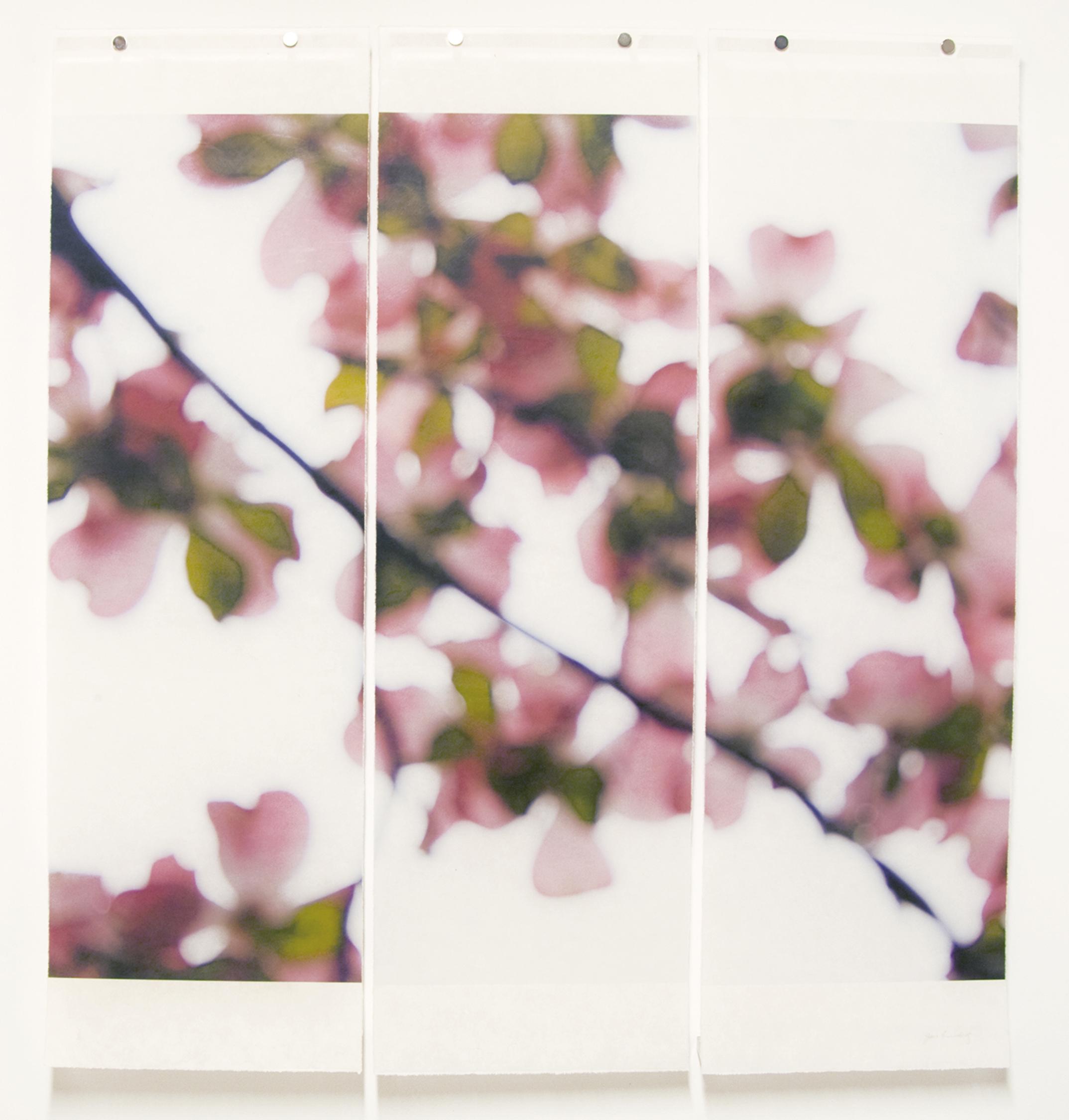 Dogwood (Pink), No.5