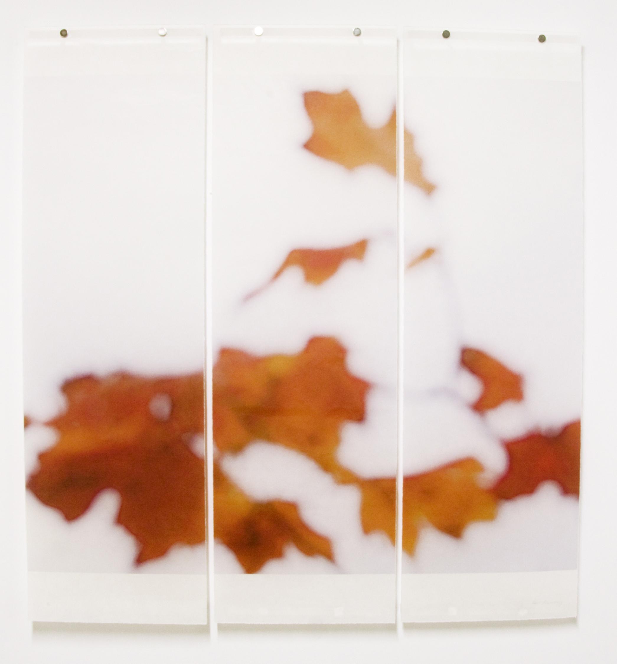 Sugar Maple Floaters (Orange), No.6