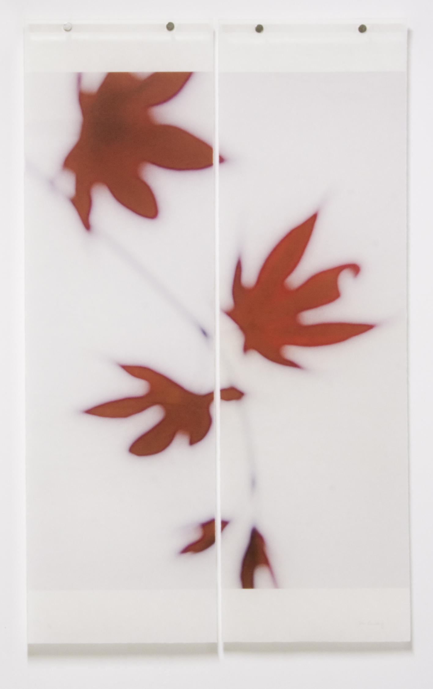 Japanese Maple, No.2