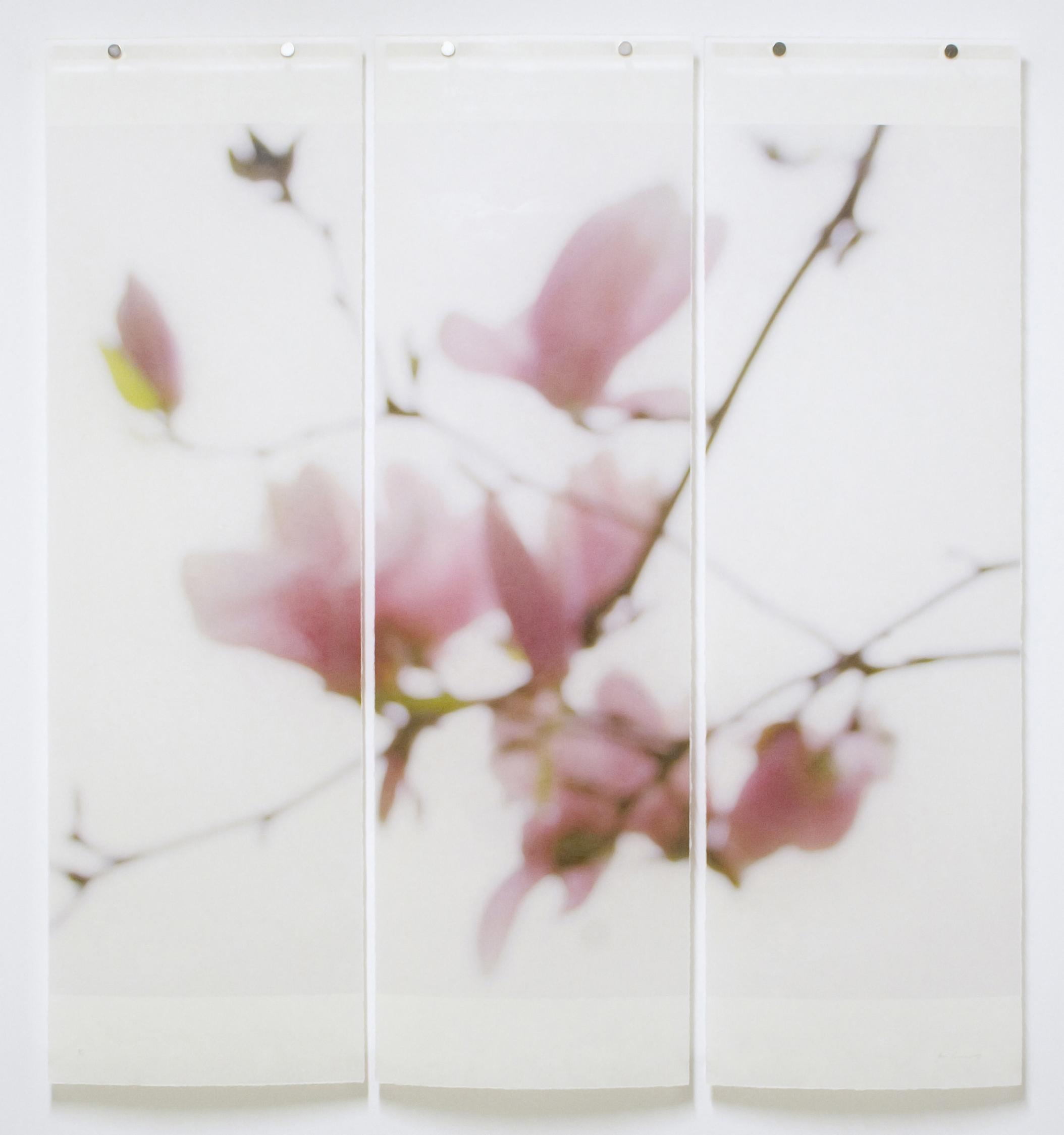 Magnolia, No.4