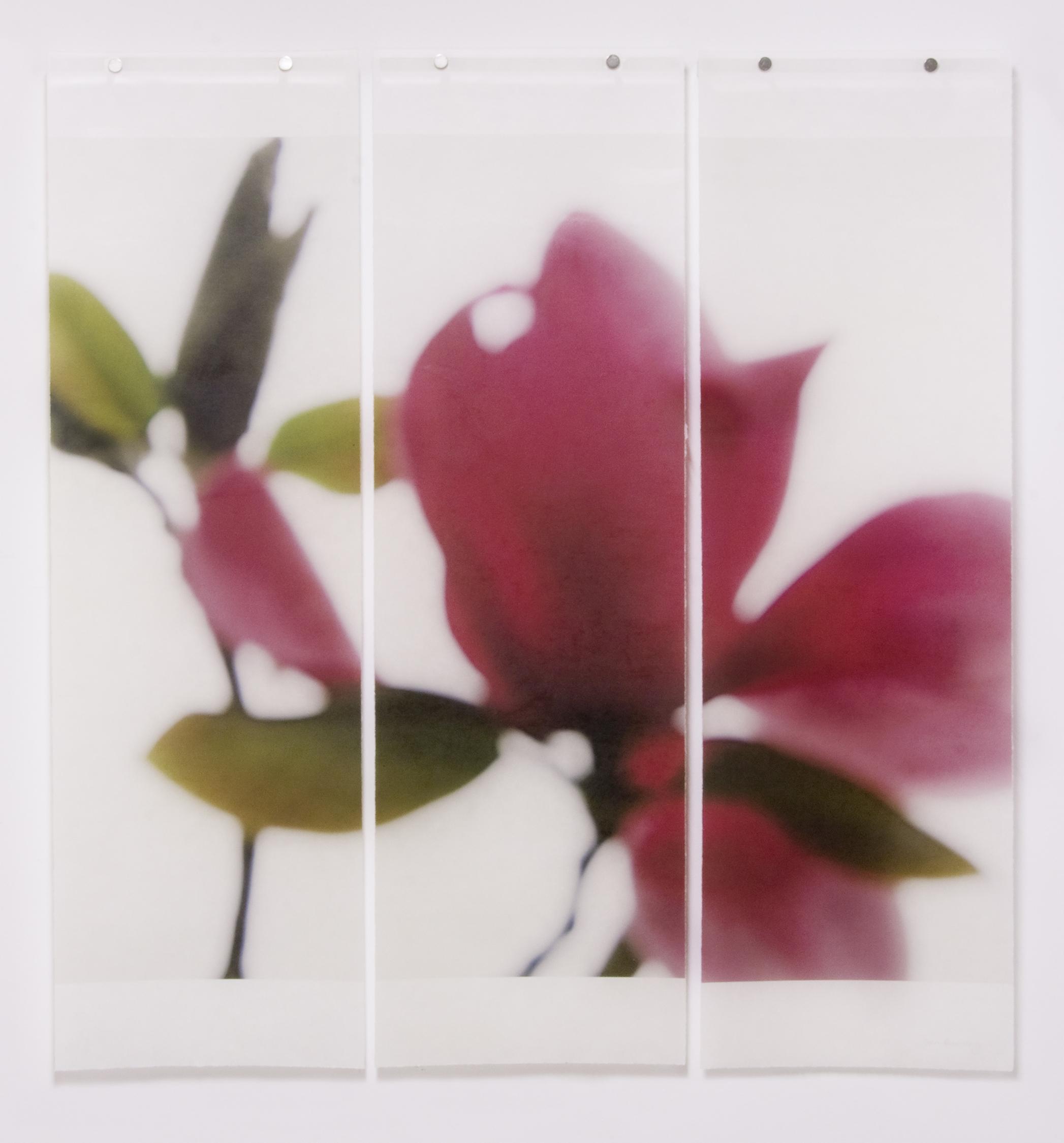 Ruby Magnolia, No.2