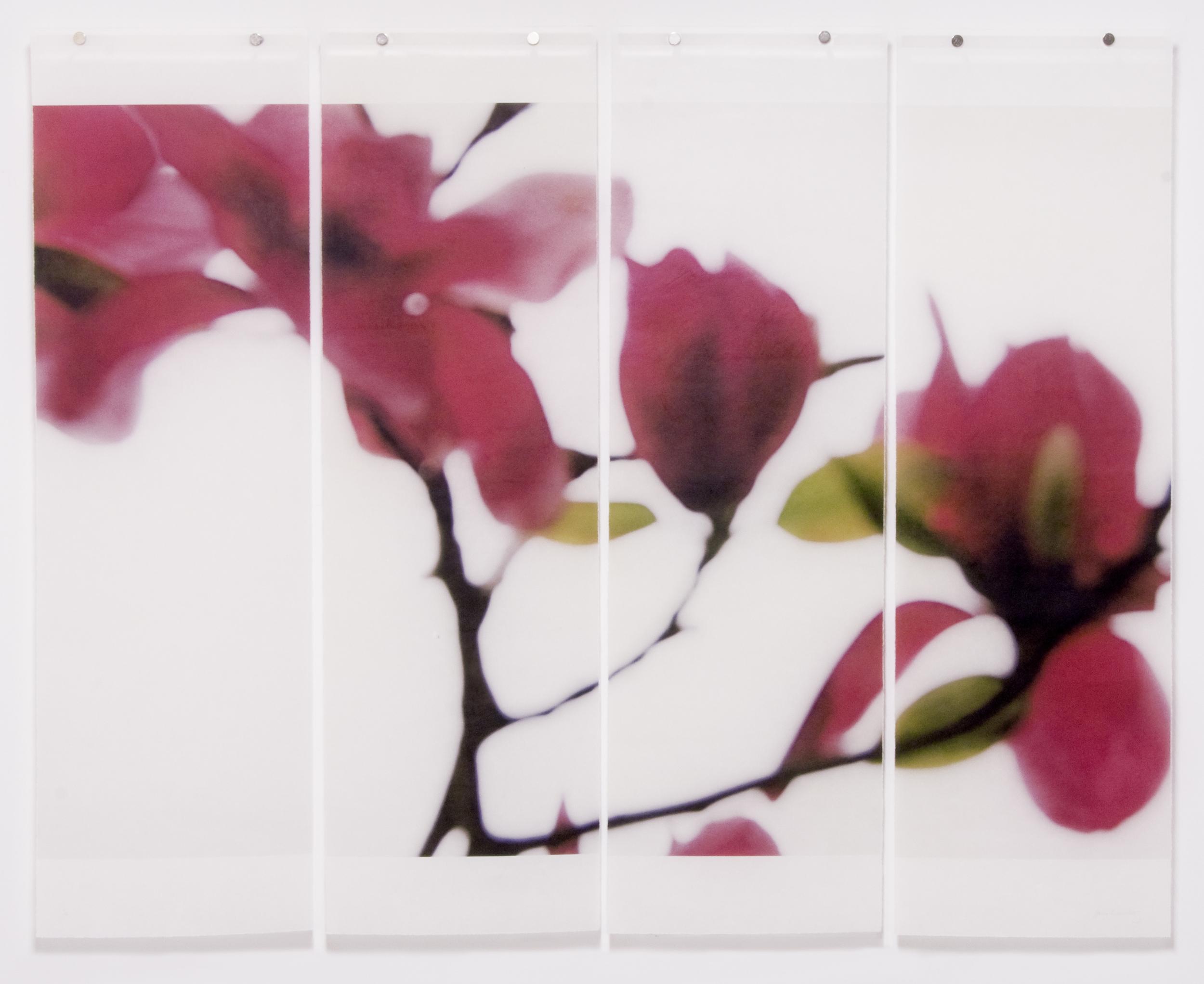 Ruby Magnolia, No.4