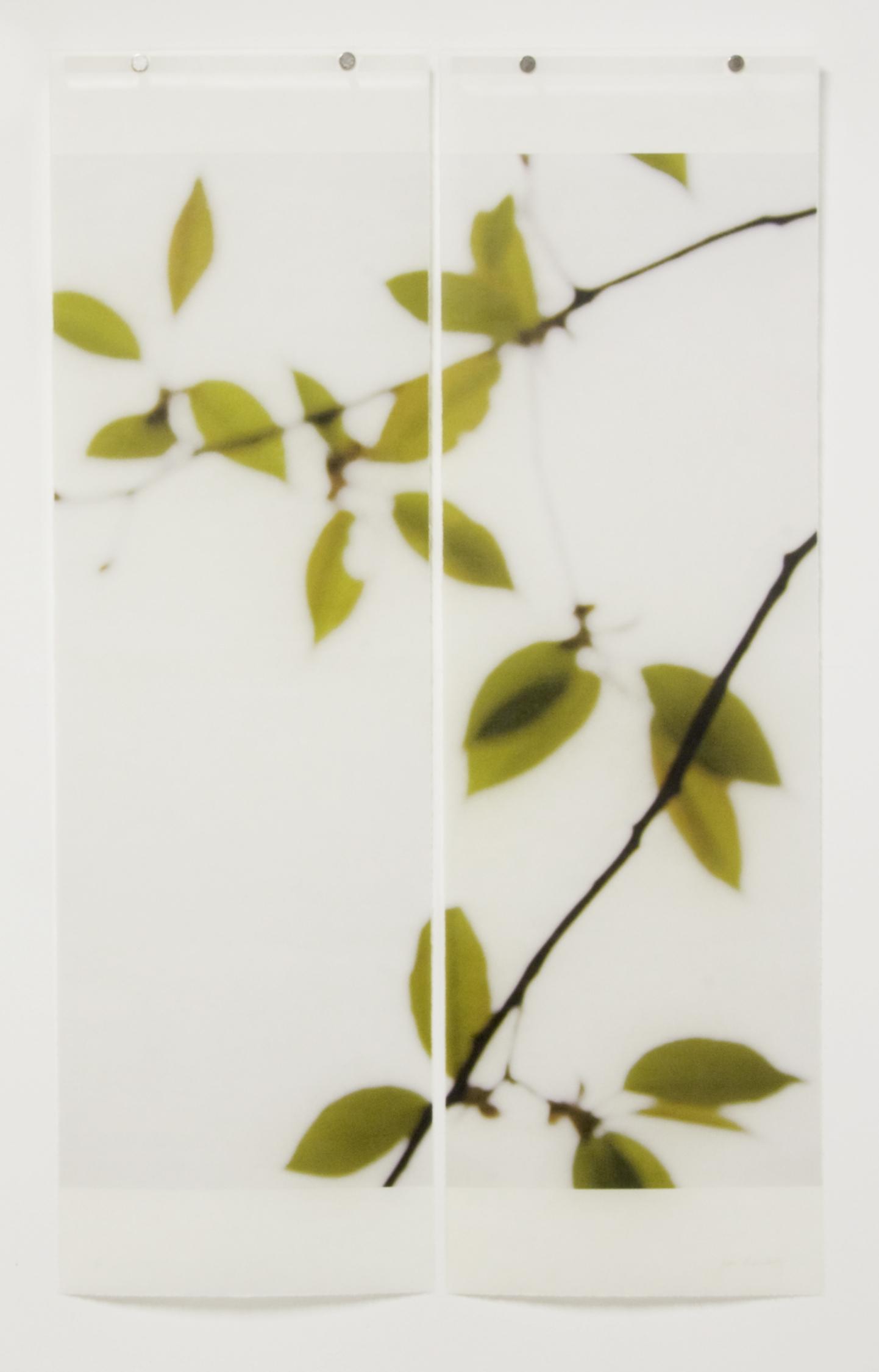 First Foliage, No.8