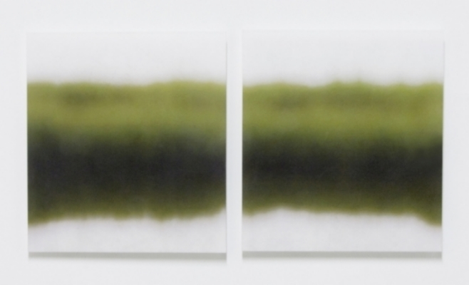 Marsh Grass, No.4