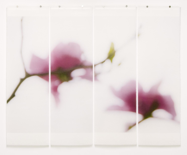 Magnolia, No.11