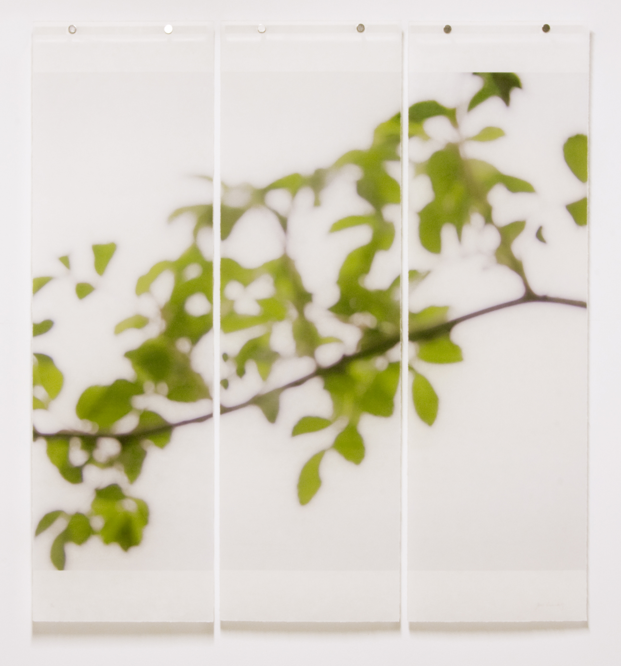 """First Foliage (Bramble),  36"""" x 34"""", Pigment Ink on Kozo Paper Infused with Encaustic"""