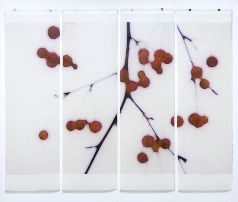 Winter Berries, 2015