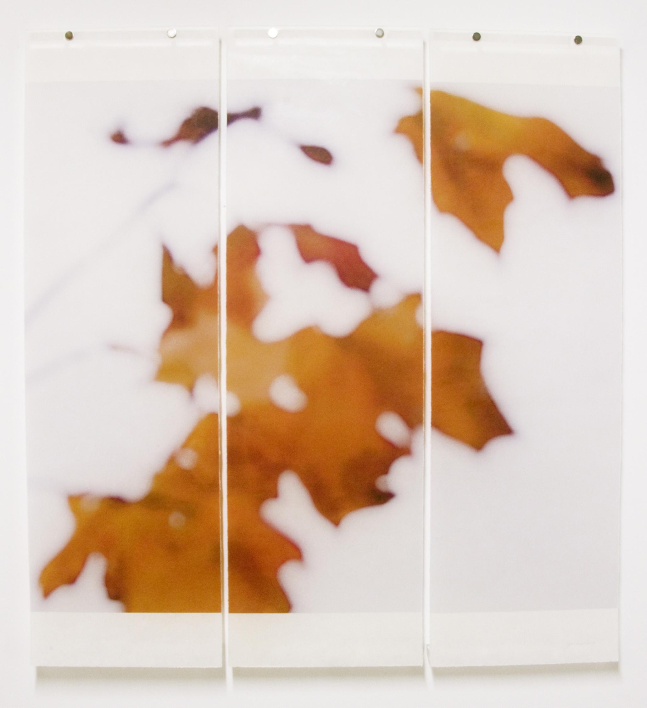 Sugar Maple Floaters (Orange), No.5