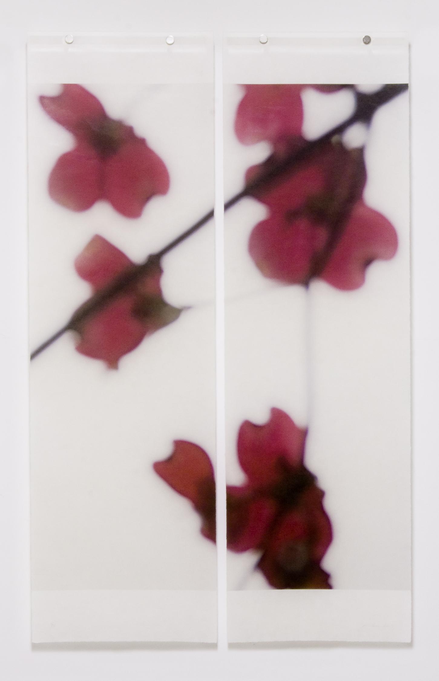 Dogwood (Red), No.4