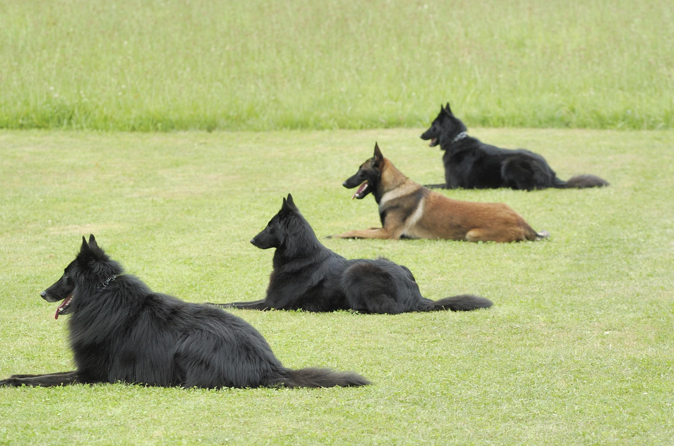 Classes Kazzi Dog Training